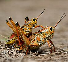 Funky Grasshopper