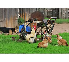 Rural landscape with farm animals. Photographic Print