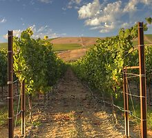 Mission Hills Vineyard by Cathy L. Gregg