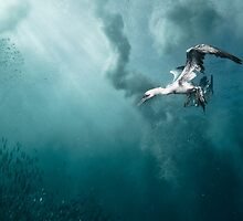 Baitball Symphony - underwater photography by Alexander Safonov by pats0n