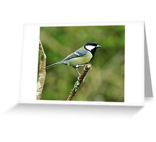 Great Tit Greeting Card