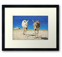 Bonaire donkeys Framed Print