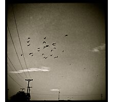fly away home Photographic Print