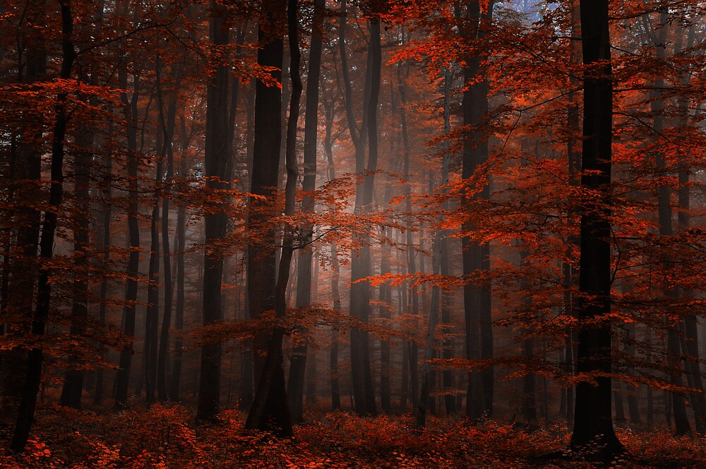 Spititual Wood by Philippe Sainte-Laudy