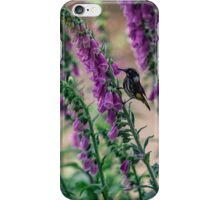 Honeyeater on Pink iPhone Case/Skin