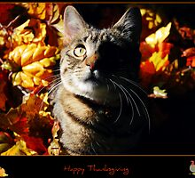 Tasha Wishes You A Happy Thanksgiving!! by jodi payne
