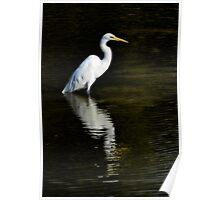 Great Egret Reflection  Poster