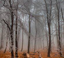 The End of Autumn by Béla Török