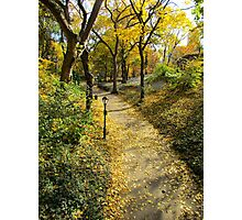 Autumn leaves, New York City  Photographic Print