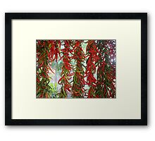 Strung and Hanging Red and Green Chili Peppers Drying Framed Print