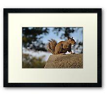 squirrel eating nuts Framed Print