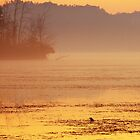 Stony Creek Dawn by Bill Spengler