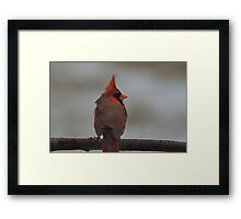 Northern Cardinal in the Wind Framed Print