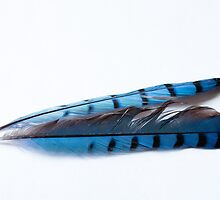 Feathers 1 of 3 by Greg Booher