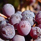 Purple Wetness by LadyEloise