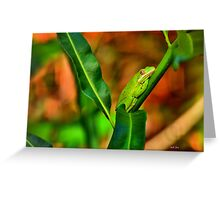 Green Tree Frog (HDR) Greeting Card