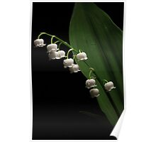 One Lily of the Valley Poster