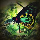Cairns Birdwing Butterfly by Aaron Davis
