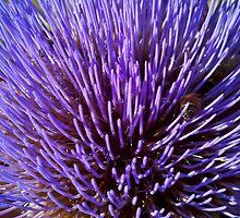 Artichoke Blossom by LadyEloise