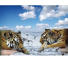 tigers and ducks ! oh my! Photographic Print