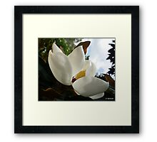 Magnificent Magnolia - 2 Framed Print