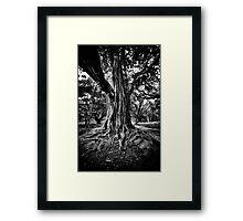 Sinewy Framed Print