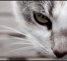 The Stare by lilliputian