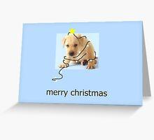 Harry Greeting Card
