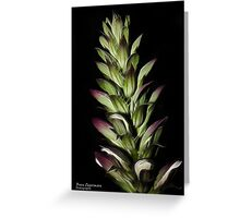 Acanthus in the evening Greeting Card