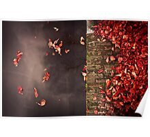 Red leaves and water Poster