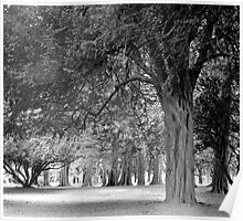 Avenue of Trees in the Phoenix Park, Dublin Poster