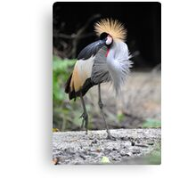African Grey Crown Crane, Singapore.  Canvas Print