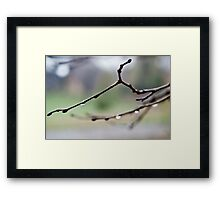 unable to see the trees for the tears Framed Print