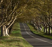 The Avenue of the Birches.  by Daniel  Bristow