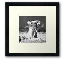 old elephant Framed Print