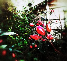 Rose Hips by MarkusWill