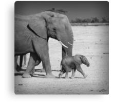 Elephant's family Canvas Print