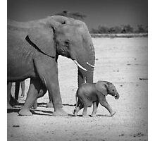 Elephant's family Photographic Print