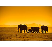 Silhouettes of elephants Photographic Print
