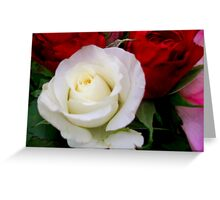 Soft White Rose Greeting Card