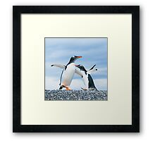 gentoo penguins Framed Print