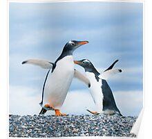 gentoo penguins Poster