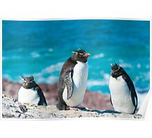 rockhopper penguins Poster