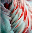 Flamingo Wing by Cathy L. Gregg