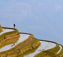 Rice terraces of Yuanyang,  Yunnan, China by javarman