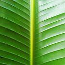 Broad Green Leaf by jezkemp