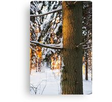 Forest in the winter Canvas Print
