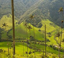 Wax palm trees of Cocora Valley, Colombia by javarman