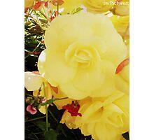 Yellow Flower. Photographic Print