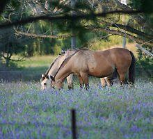 Horses by Jill Santamaria